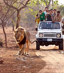 Wildlife Tours Packages