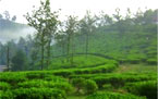 Incredible Kerala Tours packages