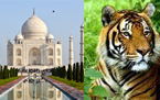 Fort and Places tour India