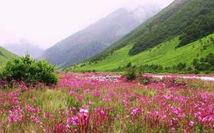 Valley of Flower Trip