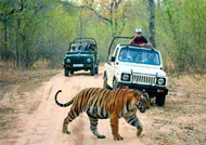Safari Tours India