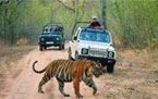 India Tourist Attraction